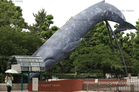Lifting Whaling Ban