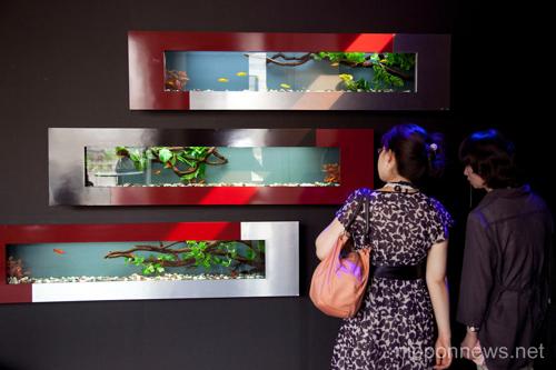 Art Aquarium Exhibition in Tokyo