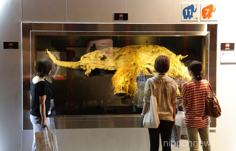 39000 year-old Mammoth showcased in Tokyo