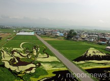 Rice Field Art 2014