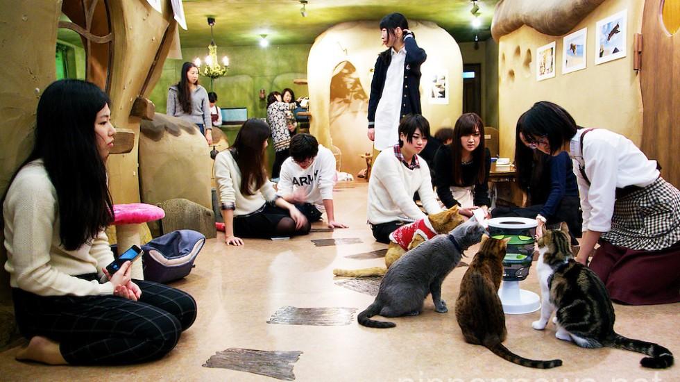 Temari no Uchi Cat Cafe in Tokyo