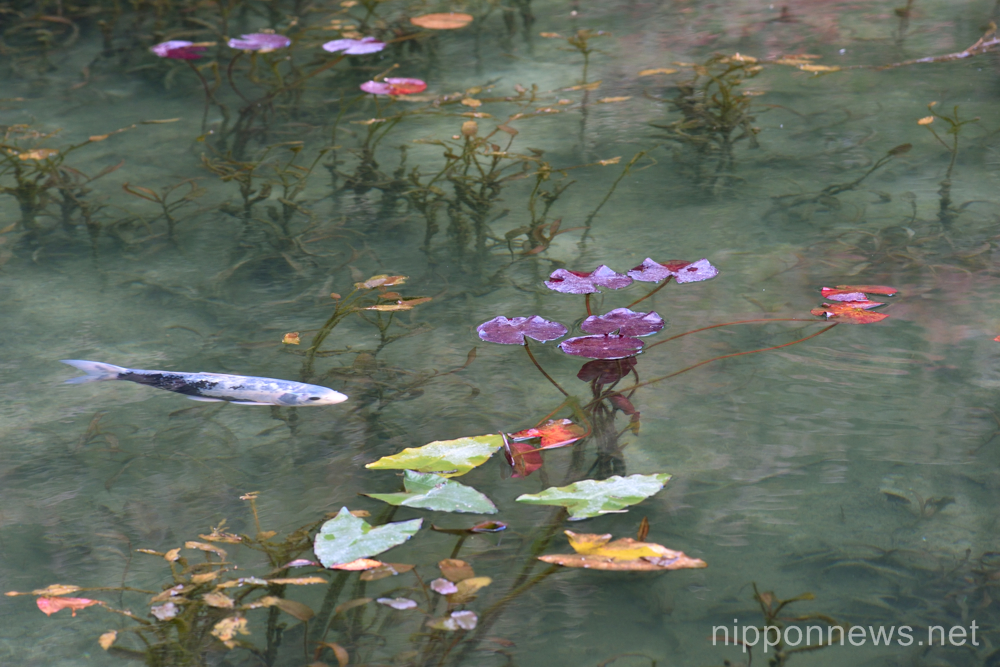 Monet pond makes an impression in japan nippon news for Artificial pond water