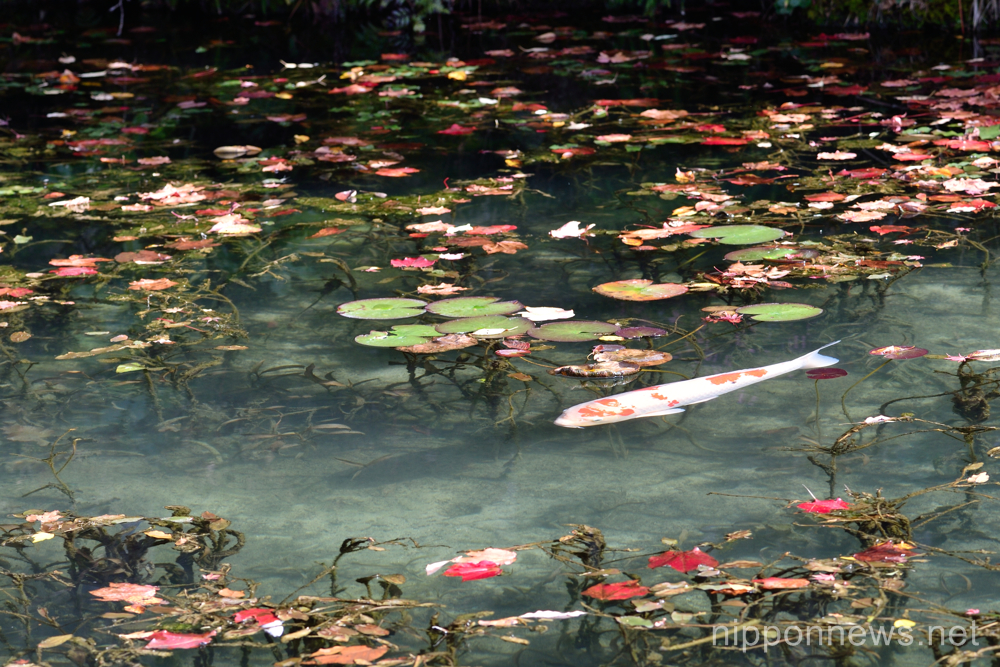 Monet pond makes an impression in Japan
