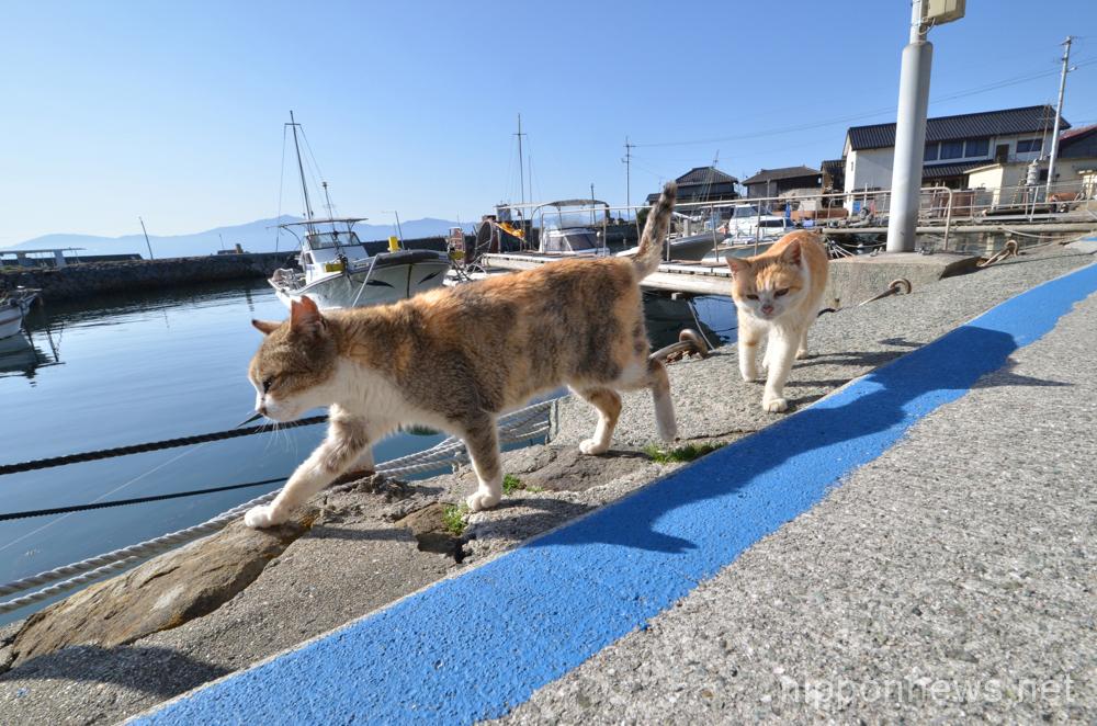 Cat island Aoshima in Ehime Prefecture