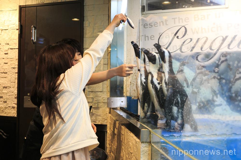 Penguin Bar in Tokyo