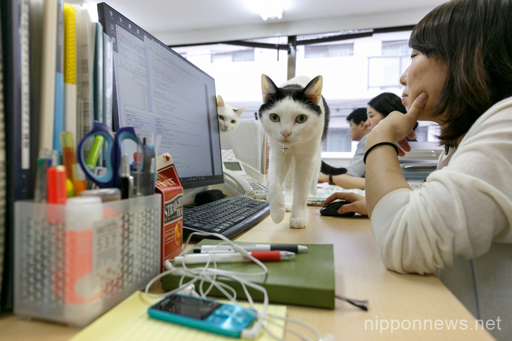 IT company Ferray saves cats and reduces employee stress