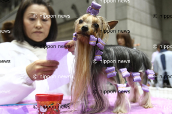 Japan International Dog ShowJapan International Dog Showアジア最大級のドッグショー