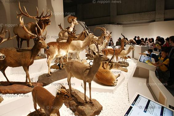 Mammals: Diversity in Terrestrial LifeMammals: Diversity in Terrestrial Life「大哺乳類展 陸のなかまたち」東京・上野で開催中