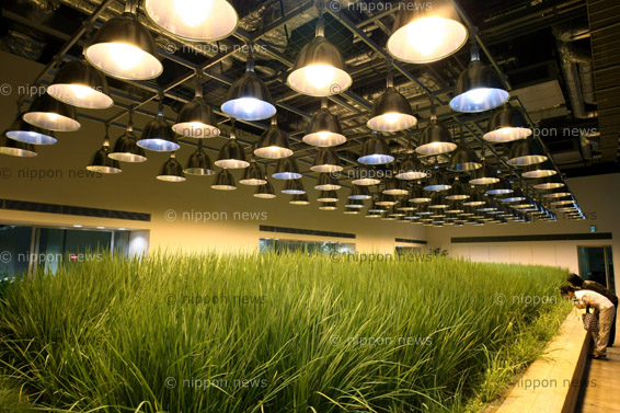 Urban Farm Pasona Group HeadquartersUrban Farm Pasona Group Headquartersパソナグループ本部:緑あふれるオフィス環境