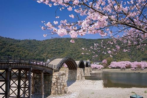 Cherry Blossom SeasonCherry Blossom SeasonCherry Blossom Season