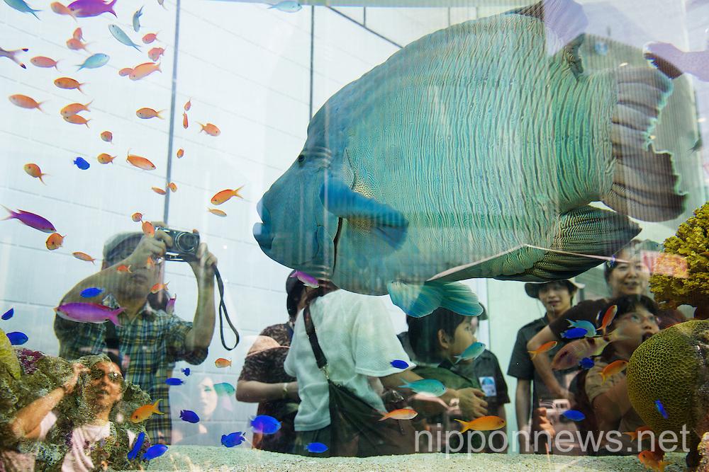 The 47th Sony Aquarium