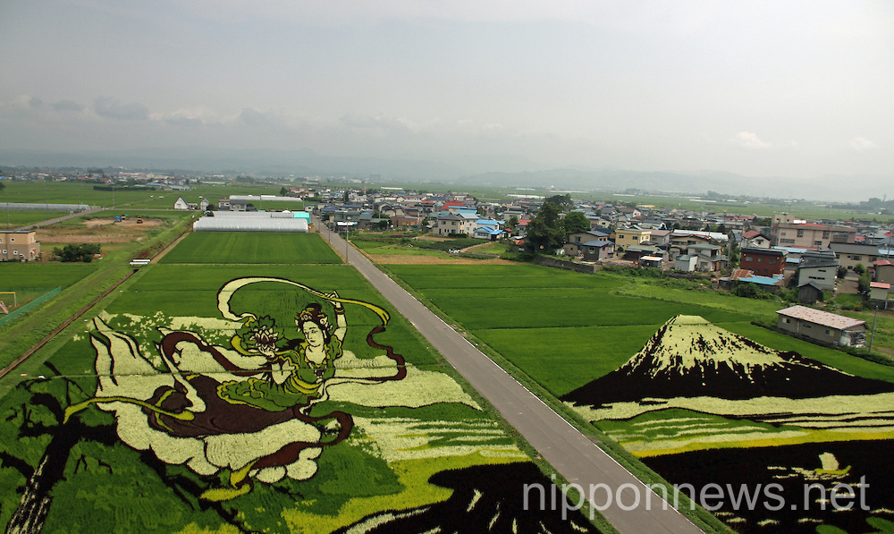 Rice Field Art 2014 in Inakadate Village, Aomori Prefecture