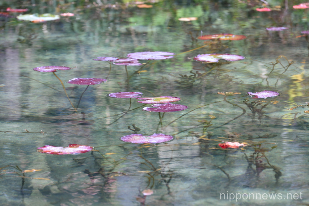 Monet Pond in Japan