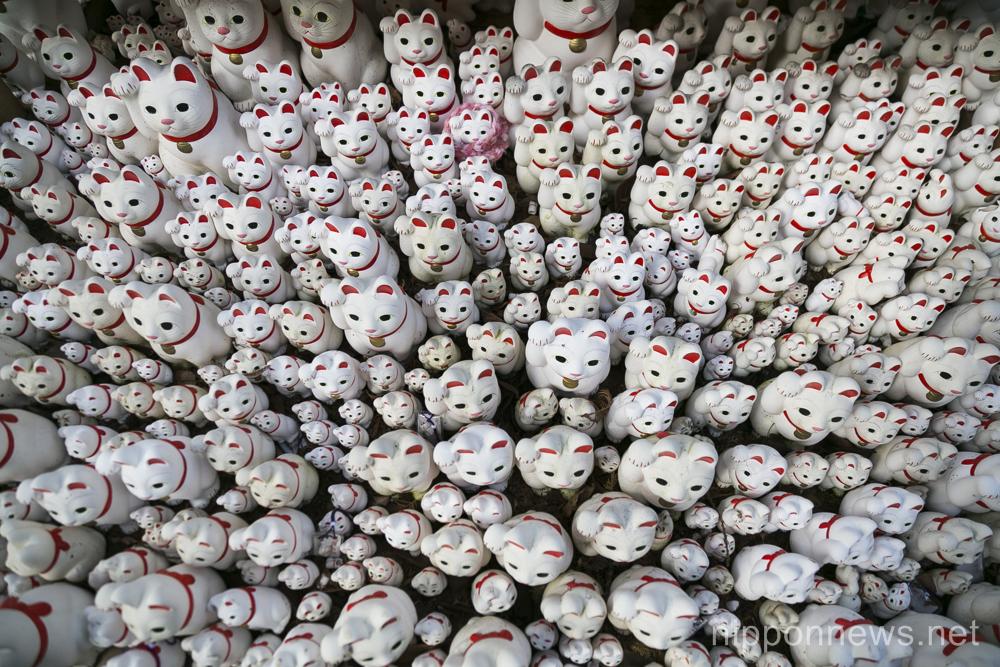 Thousands of Maneki-Neko figurines on display at Goutoku Temple