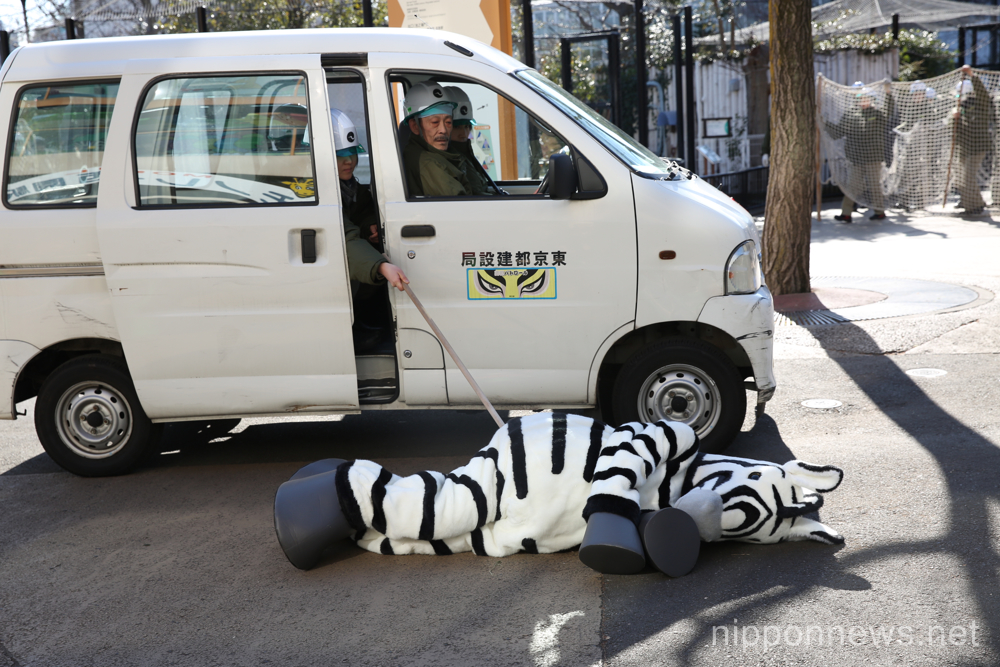 Zoo keepers capture an escaped zebra at Ueno Zoo
