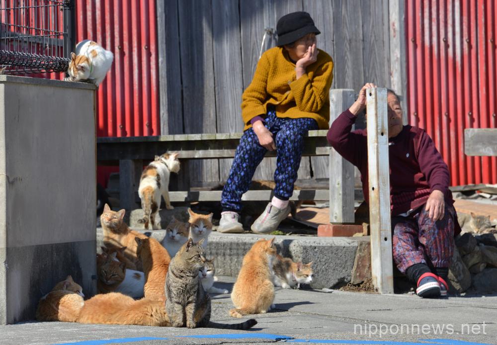 Cat island Aoshima