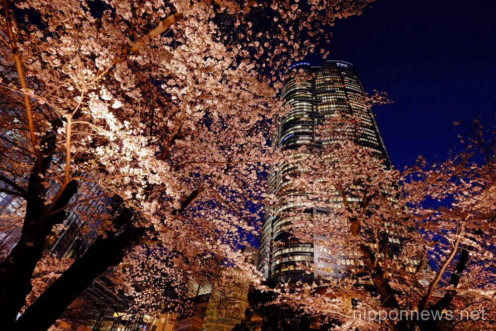 Sakura season in Tokyo