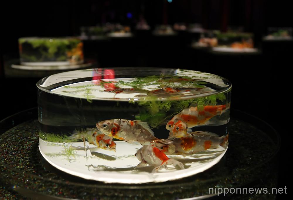 Art Aquarium Tokyo