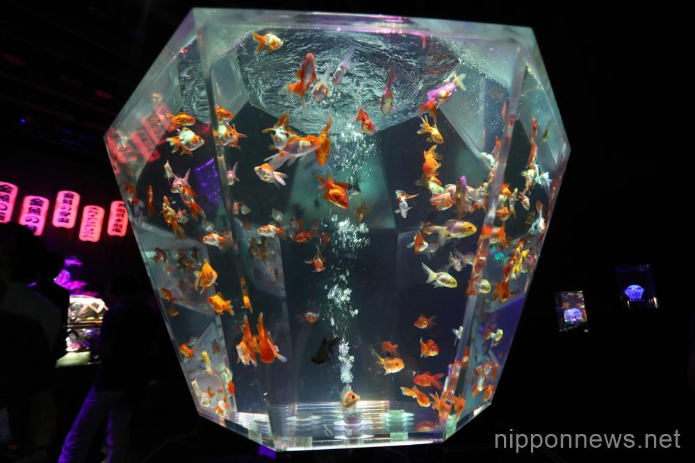 Art Aquarium 2016