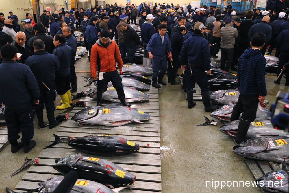Tuna fish fetches over $630,000 at first auction of 2017Tuna fish fetches over $630,000 at first auction of 2017Tuna fish fetches over $630,000 at first auction of 2017Tuna fish fetches over $630,000 at first auction of 2017Tuna fish fetches over $630,000 at first auction of 2017