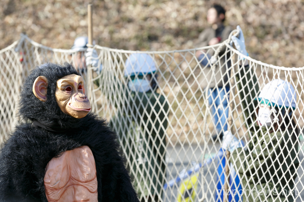 Monkey Business at Tama Zoo in Tokyo as Chimpanzee Escapes